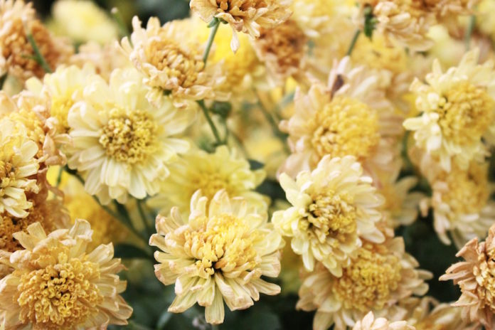fiori lutto