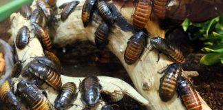 scarafaggio prevenzione
